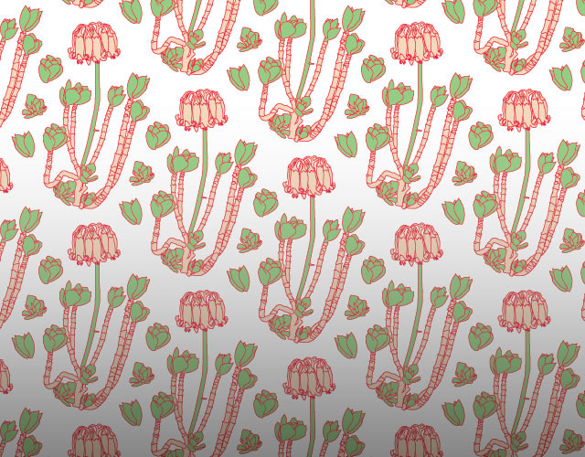 Cotyledon Wallpaper