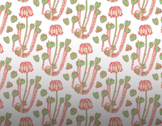 Cotyledon Wallpaper